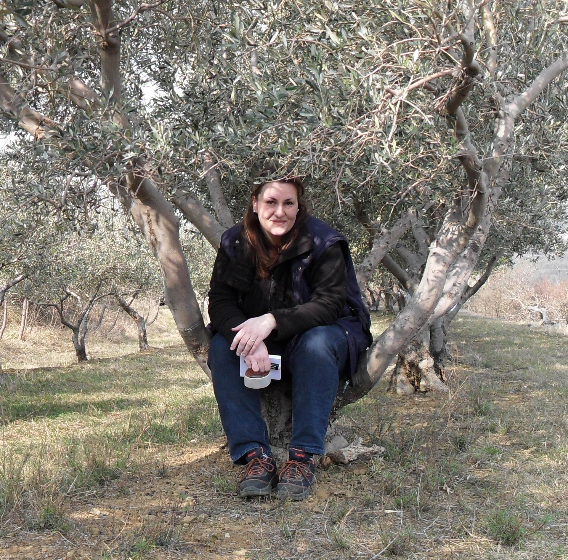 La potatura degli alberi da frutto e dell ulivo for Potatura alberi da frutto