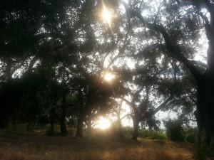 olive-grove-194555_1280